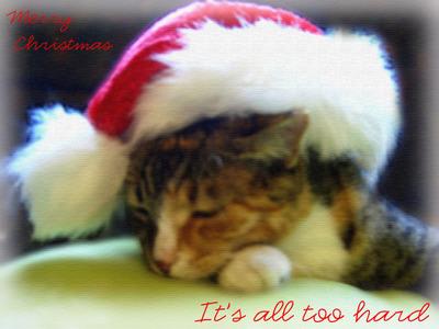 Missy_santa_hat_2copy_1